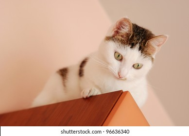 Cute cat sitting on the cupboard under the ceiling and looking down