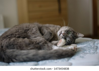 a cute cat sitting on a mattress looking at the camera