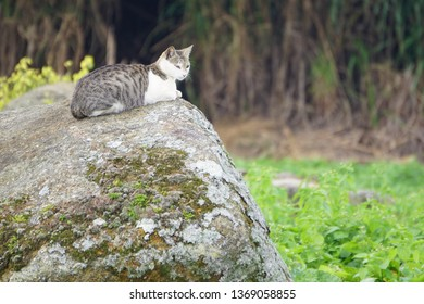 Cute cat sitting on top of rock at outdoor place.