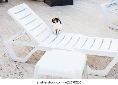 Cute cat sitting on white chair near pool, sunny