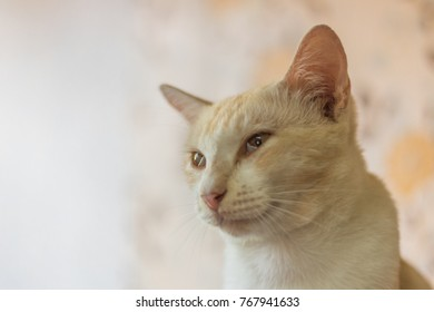 a cute cat was sitting watching something. soft focus background