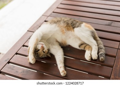 cute cat sleeping and lying on wooden desk in the outdoor