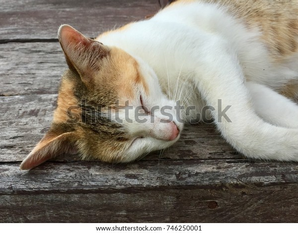 The cute cat sleeping on the bench.
