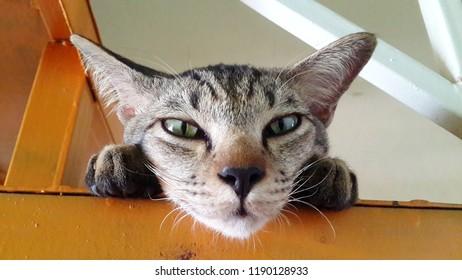 the cute cat sleepy - Shutterstock ID 1190128933