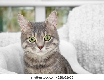 Cute cat in soft pet bed, close up