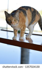 Cute cat standing on the balcony