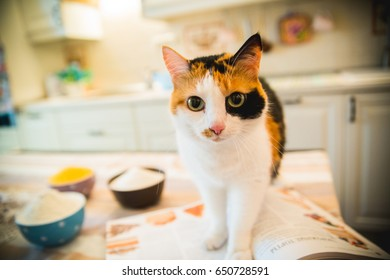 Cute cat standing on the table and looking