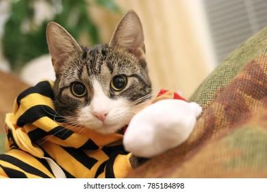cute a cat striped White and black