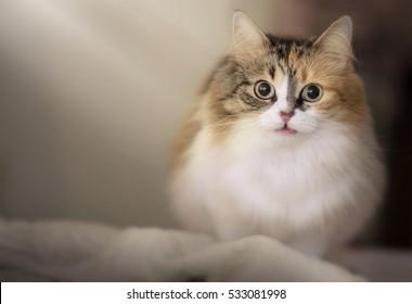 Cute cat and a sunlight