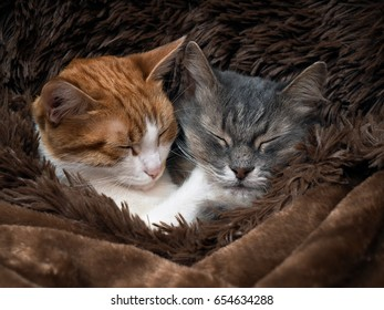 Cute cat under the warm fur blanket