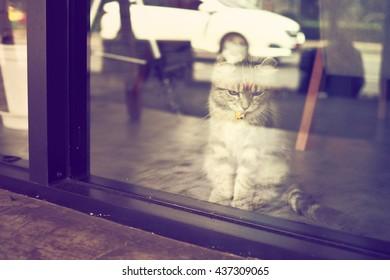 cute cat in vintage color tone