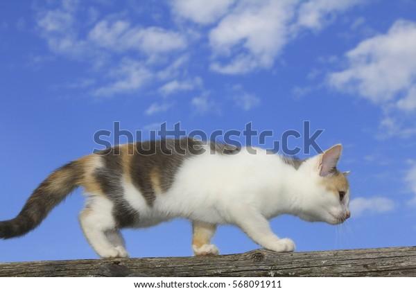 Cute cat walking