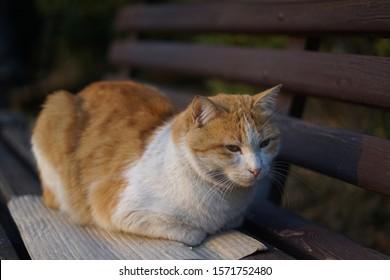 Cute Cat Wallpaper Background Kitty Bench Animals Wildlife Stock Image 1571752480