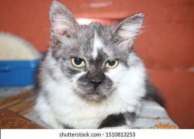 Cute Cat Wallpaper Windows Stock Photo Edit Now 1510813253