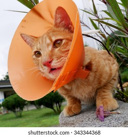 The cute cat wearing the orange plastic cone collar.
