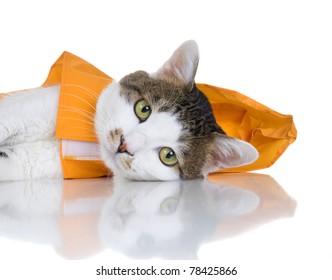 An cute cat wearing an orange slicker. White background.