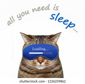 The cute cat wears a sleeping mask. All you need is sleep. White background.