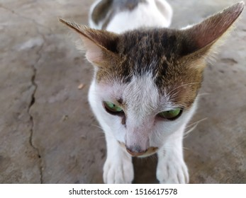 cute in cat white when look at the eyes colors green beautiful so much