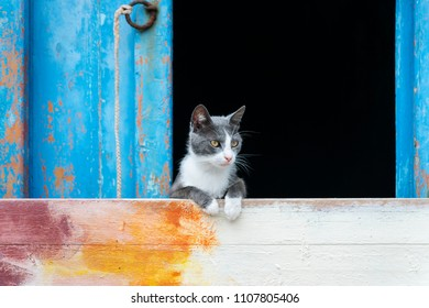Cute cat window