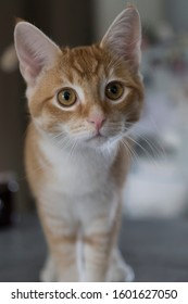 cute cats with big eyes