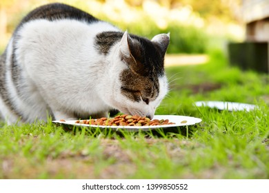 Cute cats are eating food on green grass.