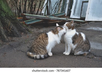 Cute cats in love. Street cats. Funny cats in the street. Cats are kissing.