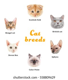 Cute cats with names of breeds on white background