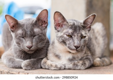Cute cats are sleep together on the wooden