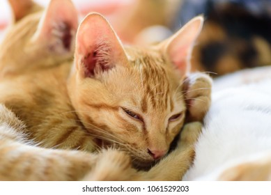 blurry happy small striped kittens rolling stock photo edit now