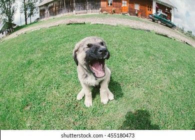 cute caucasian dog