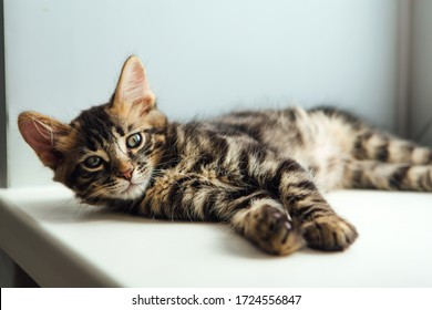 Cute charcoal bengal kitty cat laying on the windowsill and relaxing.