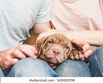 Cute, charming puppy, lying on the lap of a young and caring couple. Close-up. Pet Care Concept