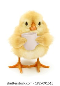 Cute chick with cup of coffee conceptual photo isolated on white background