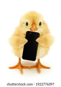 Cute chick hält Handy lustige konzeptionelle Foto