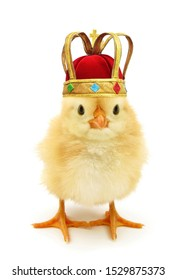 Cute chick king or queen monarch costumed with golden crown