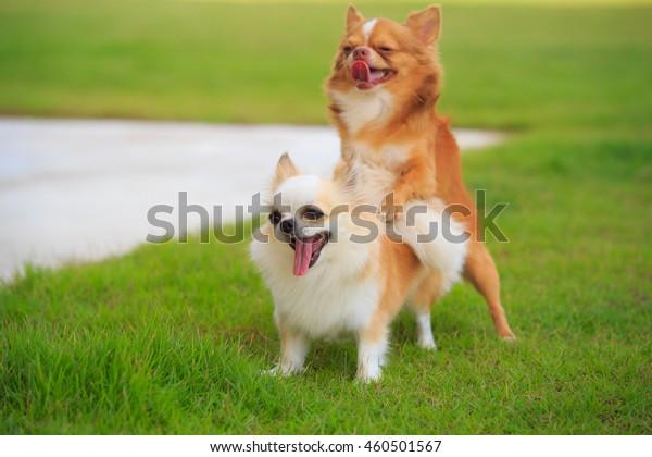 Hund geschlechtsverkehr mit angepinkelt hund