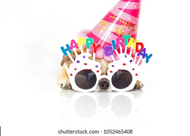 Cute Chihuahua Dog for party birthday wearing glasses and party hat , isolated on white background