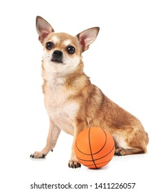 Cute chihuahua dog with rubber ball on white background