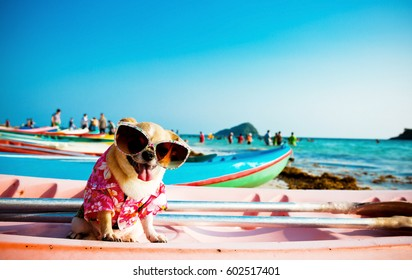 Cute Chihuahua dog wearing sunglasses on a Kayak at the ocean shore .HDR+Vintage style