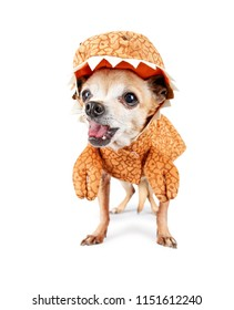 cute chihuahua dressed in a dinosaur costume isolated on a white background  sc 1 st  Shutterstock & Dinosaur Costumes Images Stock Photos u0026 Vectors | Shutterstock