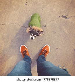 cute chihuahua dressed up in a green jacket with a fur lined hood at his owner's feet looking up in a unique perspective toned with a retro vintage instagram filter