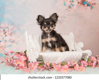 Cute Chihuahua puppy on a white doll bench on a pastel colored romantic sweet background