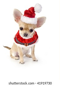 cute Chihuahua puppy with Santa costume isolated on white background