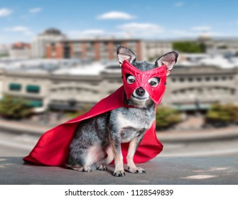cute chihuahua sitting above a city in a super hero costume outside