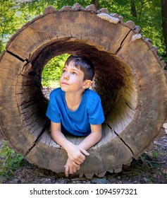 Cute child boy inside the trunk of hollow tree. Summer portrait