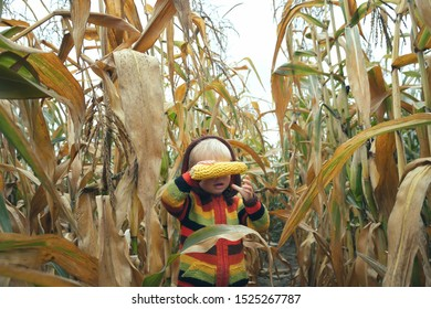 Cute child in colorful sweater close his eyes with ripe corn cob on yellow autumn corn field. Fall season concept.