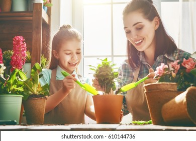 Cute child girl helps her mother to care for plants. Mom and her daughter engaged in gardening near window at home. Happy family in spring day.