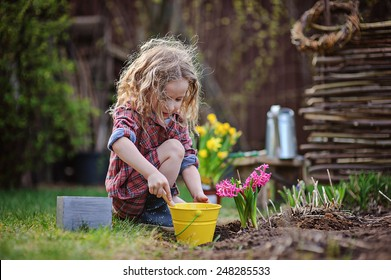 cute child girl plays little gardener and planting hyacinth flowers to the ground in spring garden, seasonal outdoor activities, happy childhood