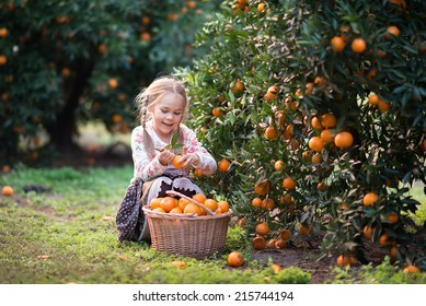 cute child picking harvest of fruit at the farm