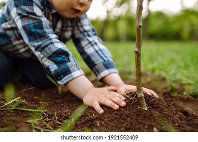 Cute child plants young tree on black soil. Fun little gardener. Spring concept, nature and care.